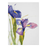 Floral Iris watercolor Poster