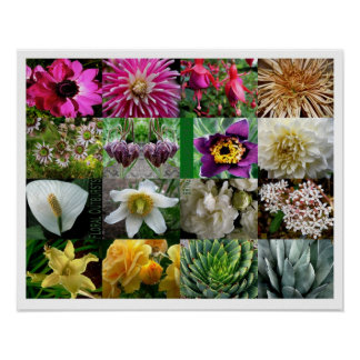 Floral Outbursts Poster