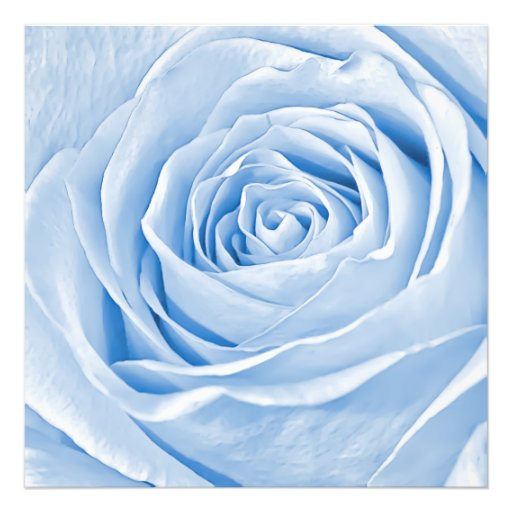 Floral Photo Dainty Light Blue Rose