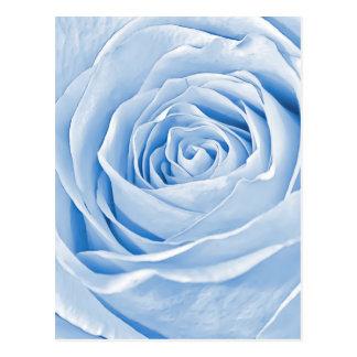 Floral Photo Dainty Light Blue Rose Postcard