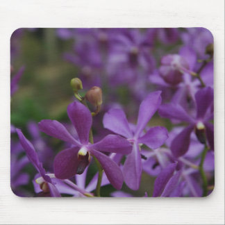 Floral Photograph Purple Orchids in garden Mouse Pad