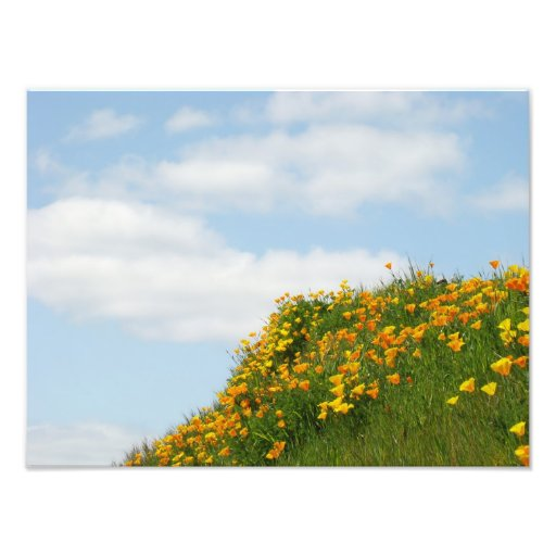 Floral Photography Nature art prints Poppy Flowers Photo Print