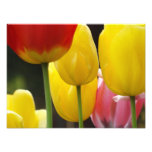 Floral Photography prints Tulip Flowers Nature Art Photo