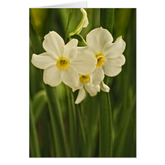 Floral Photography:  White Spring Narcissus Greeting Card