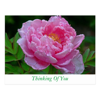 "FLORAL POSTCARD, ""PINK PEONY/THINKING OF YOU"" POSTCARD"