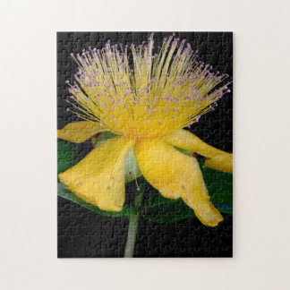 Floral Series Jigsaw Puzzle