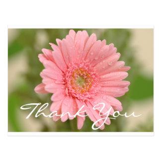 Floral Thank You Pink Gerbera Daisy Flower Postcard