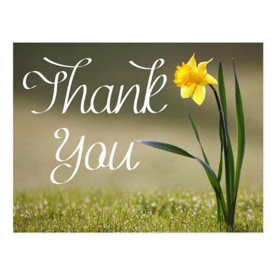 Floral Thank You Yellow Daffodil Flower Postcard
