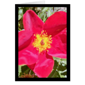 Floral Velvet Punch- Song of Sol. 8:7 Greet. Card