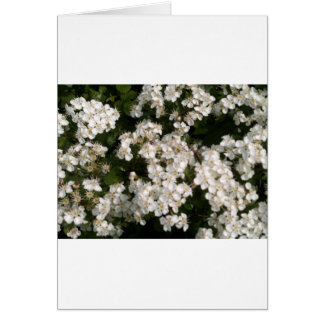 Floral White Card