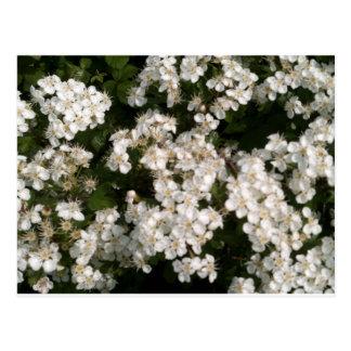 Floral White Postcard