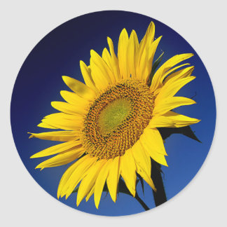 Floral Yellow Sunflower Flower Blue Wedding Party Classic Round Sticker