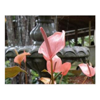 Flores Anturio Postcard