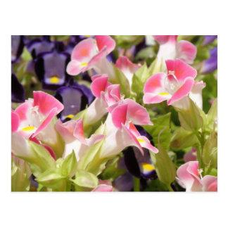 Flores de Fiesta Postcard