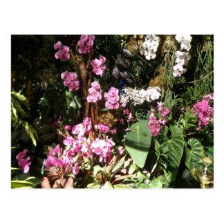 Flores de Orquideas Postcard