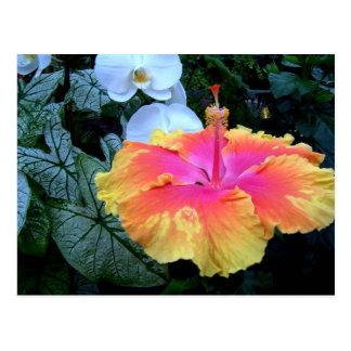 flores. postcard