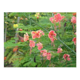 Flores Silvestres Postcard