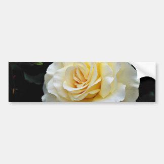 Floribunda 'French Lace' White flowers Bumper Stickers