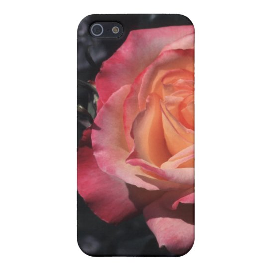 Floribunda Rose Sheila's Perfume iPhone 5/5S Covers