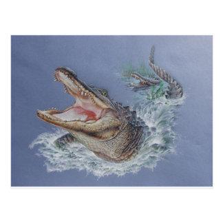 Florida Alligator Postcard