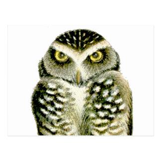 Florida Burrowing Owl Postcard
