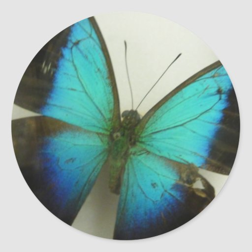 Florida Butterfly Round Stickers