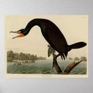 Florida Cormorant Poster