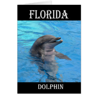 Florida Dolphin Card