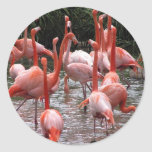 Florida Flamingos Classic Round Sticker