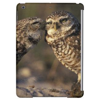 Florida, Fort Myers. Burrowing Owl pair bonding