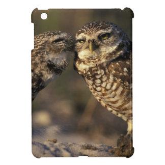 Florida, Fort Myers. Burrowing Owl pair bonding iPad Mini Case