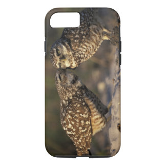 Florida, Fort Myers. Burrowing Owl pair bonding iPhone 8/7 Case