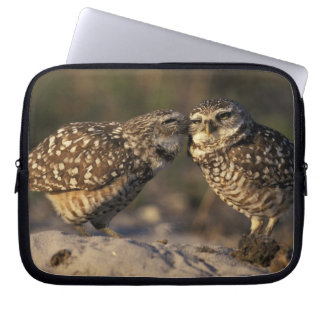 Florida, Fort Myers. Burrowing Owl pair bonding Laptop Sleeve