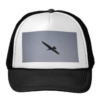 florida great white egret against sky shadow bird mesh hats