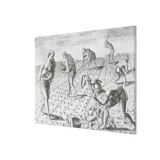 Florida Indians planting maize Canvas Print