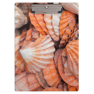 Florida Keys, Key West, seashells Clipboards