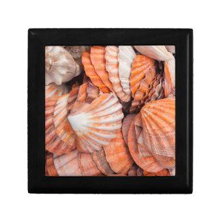Florida Keys, Key West, seashells Gift Box