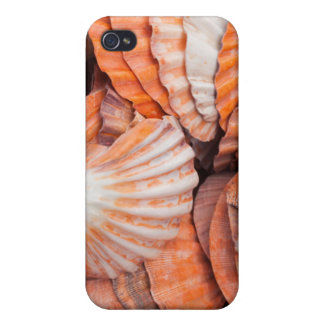Florida Keys, Key West, seashells iPhone 4 Cases