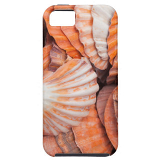 Florida Keys, Key West, seashells iPhone 5 Case