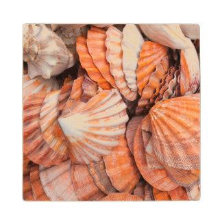 Florida Keys, Key West, seashells Wood Coaster