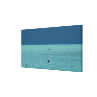Florida Keys Pelicans Canvas Print
