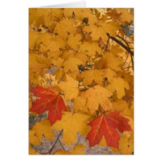 Florida Maple in Autumn Card