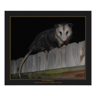 Florida Opossum Print