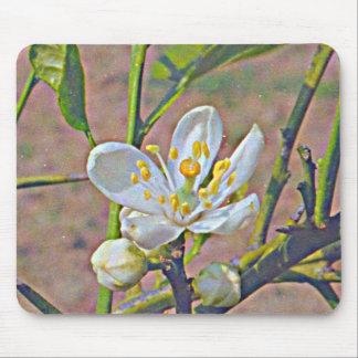Florida Orange Blossom Mouse Pads