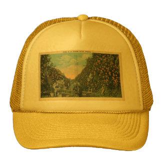 Florida Orange grove Cap Hats
