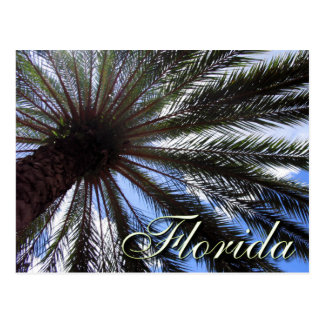 Florida Palm Post Cards