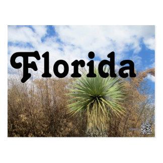 Florida Palm Tree Postcard