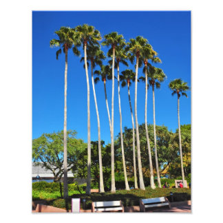Florida Palm Trees Photograph