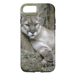 Florida panther, Felis concolor coryi, iPhone 7 Case