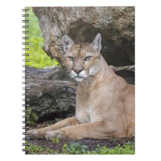 Florida Panther Notebook